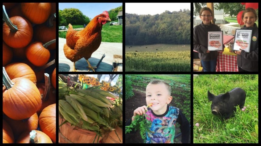 Pumpkins, farm animals, and farm kids