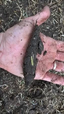 Soil structure test