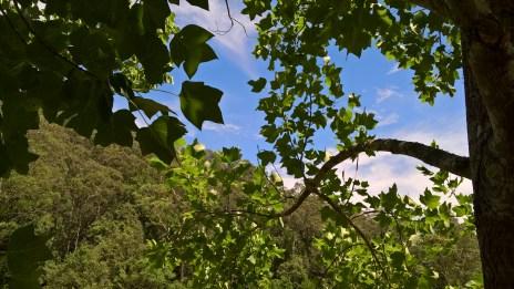 Plant deciduous shade