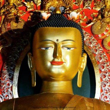 Statue of Buddha Shakyamuni in theSeat of Happiness Temple, Norbulingka Institute, Dharamshala