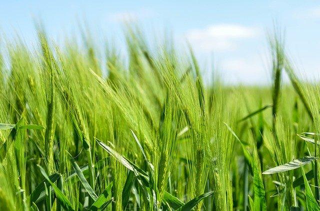 invertirán-en-proteina-para-cultivos