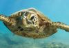 Biomark lanza una base de datos de marcado de tortugas marinas, de acceso abierto
