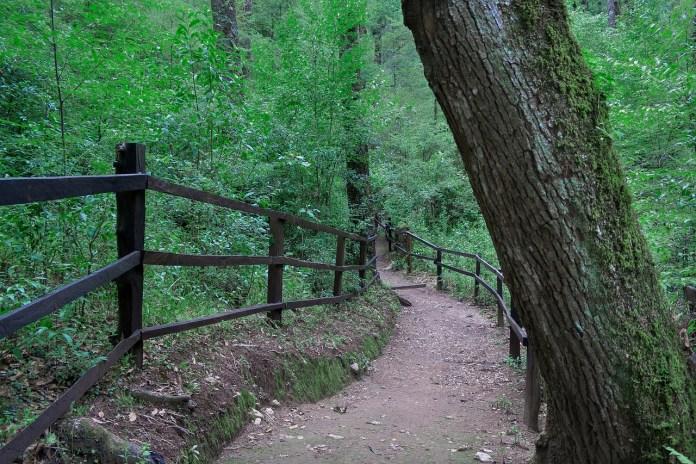 Iberdrola promueve la plantación de 20 millones de árboles hasta 2030