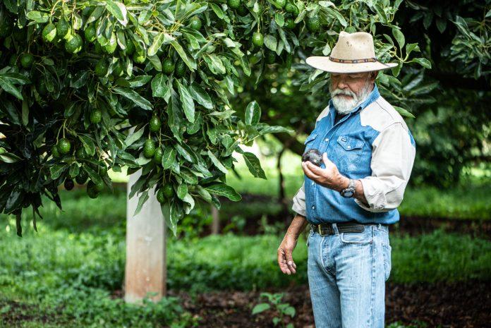 Corteva Agriscience: Los insectos y el suministro de alimentos