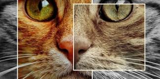La lucha por las voces olvidadas: los derechos de los animales