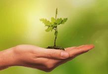 Biodiversidad, clave en la economía mundial: AXA