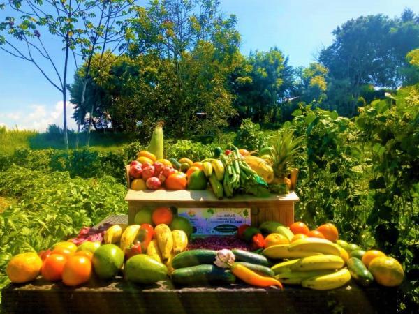 Nuevos emprendimientos como el de la Huerta Hotel ofrece vegetales orgánicos en lugar de centrarse tan solo en la hospedería.