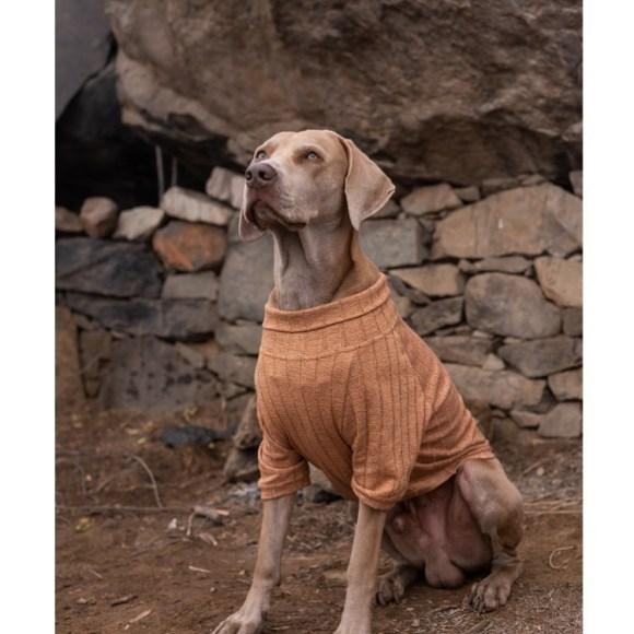 Zsa Zsa World un emprendimiento de ropa para mascotas.