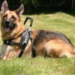 """Wounded Iraq War Vet With PTSD Sues Over German Shepherd Service Dog"""