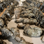The Army finally realizes sleep is a good thing, encourages naps