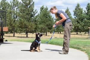 german shepherd pupies training boise idaho