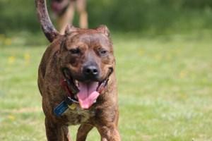 dog training Chattanooga