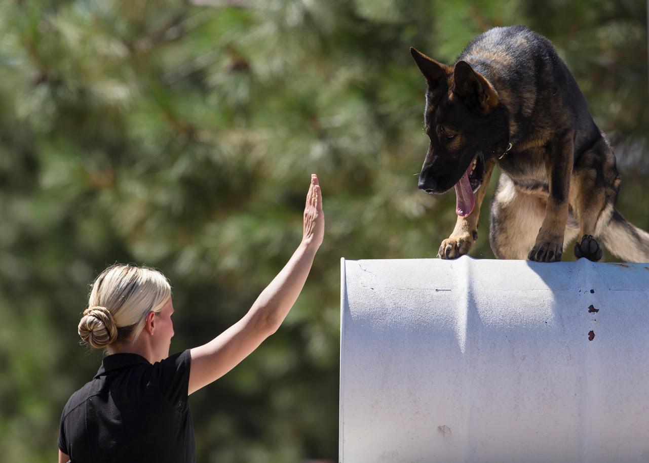 k9 service dog training