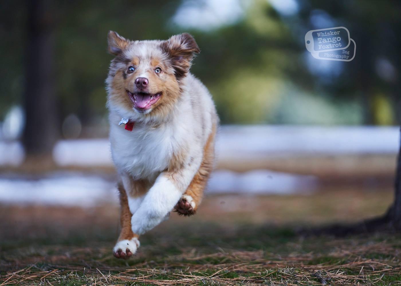 puppy behavior development training