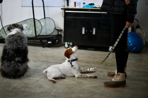 Puppy Obedience training Boise