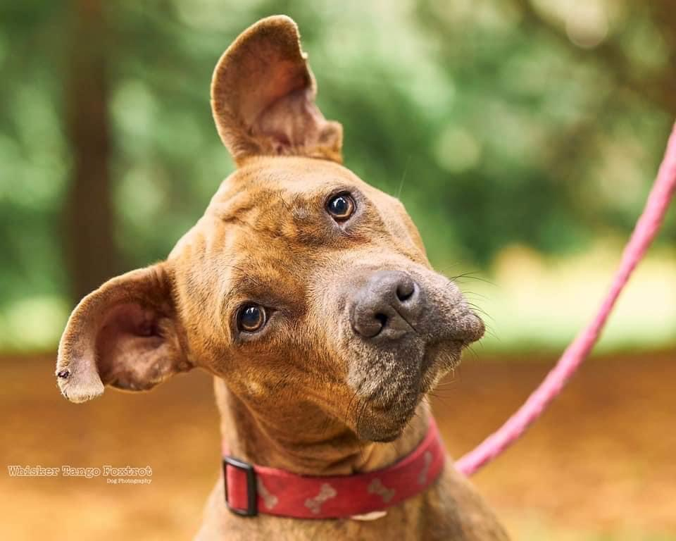 path of hope rescue puppy spokane wa