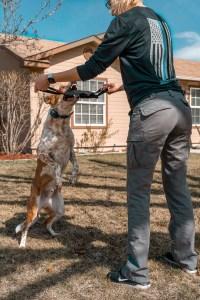 boise dog trainer heeler mix