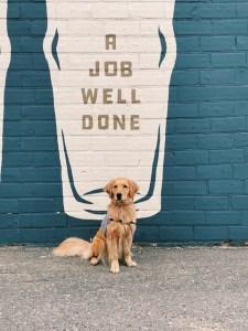 service dog training boise idaho
