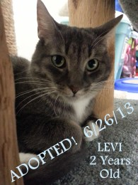 levi adopted2