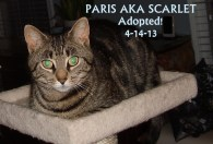 Paris adopted1