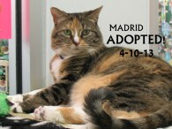 madrid adopted