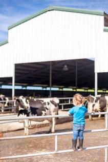Ocean Breeze Dairy