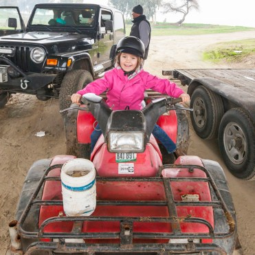Bikes, cows, horses and quads to bring in the New Year