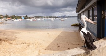 Lunch at the famous Doyle's in Watsons Bay
