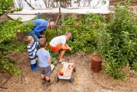 Tending to the Brown vegetable garden