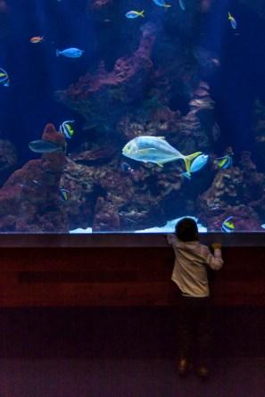 The San Sebastian aquarium