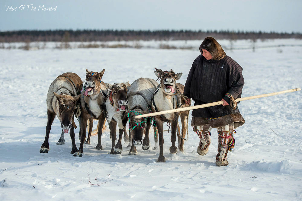 Nenets and khanty nomads with reindeers, tour to herders of Yamal, Russia