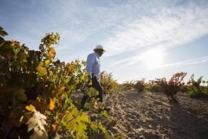 Jorge in vineyard