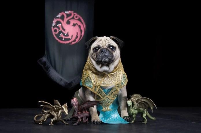 Vamers - Geekosphere - Mash-Up - The Pugs of Westeros star in A Game of Bones Dinner is Coming - Daenerys Targaryen