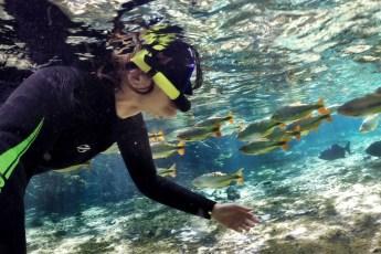 subaquática flutuação rio da prata