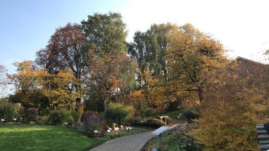 Jardim Botânico Tøyen