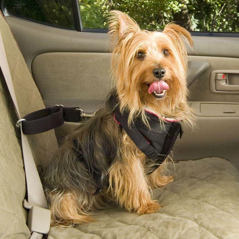 Em viagens de carro, pets só podem viajar se estiverem de cinto - Viajar com o pet