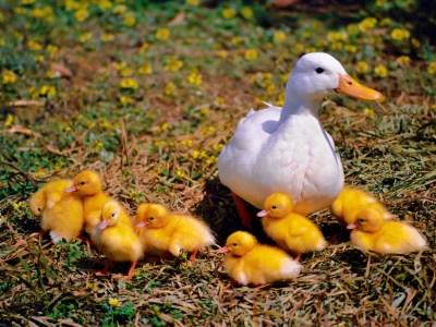 ¿Tienes una familia numerosa?