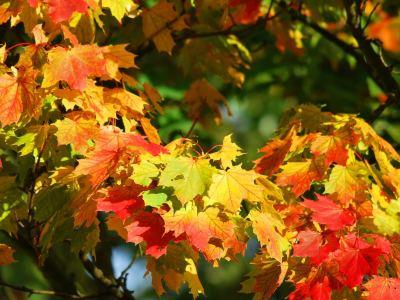 Llegó el otoño.