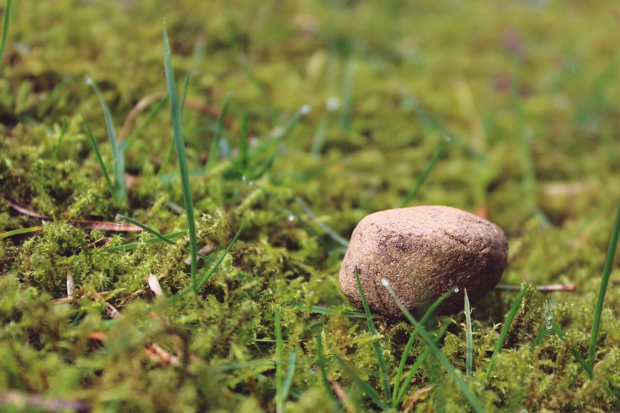 La vida. Tropezar dos veces con la misma piedra. vamosaudioblog.com