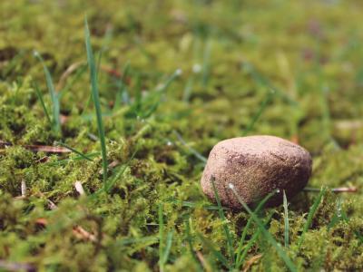 Tropezar dos veces con la misma piedra.