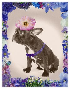 Flower Power Dog Azul