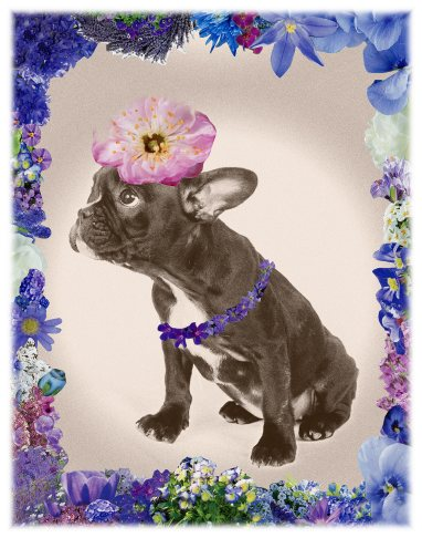 Flower Power Dog Azul