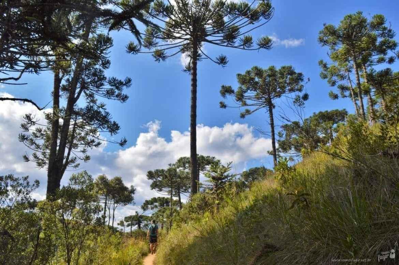 trilhas do Horto Florestal de Campos do Jordão