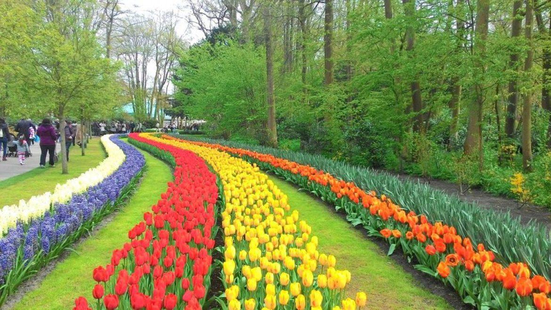 campos de tulipas de Keukenhof
