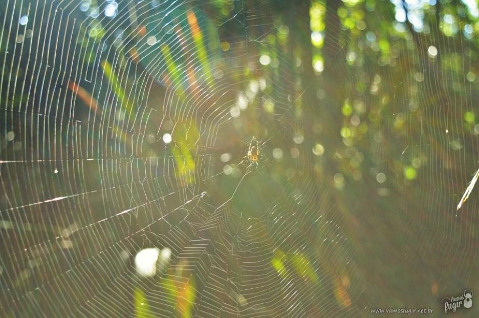 Teia de aranha floresta amazônica