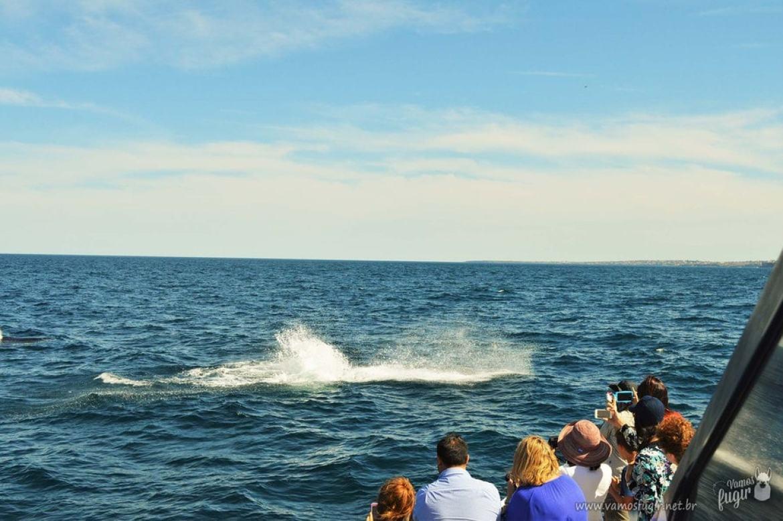 Whale Watching em Sydney