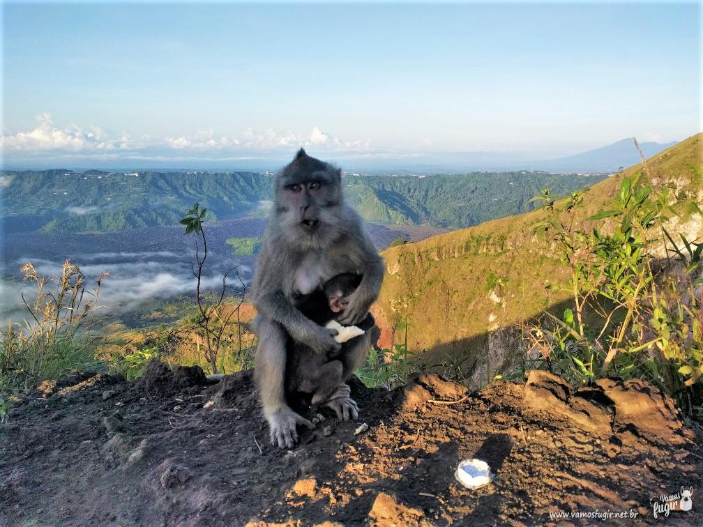 O que fazer em Ubud