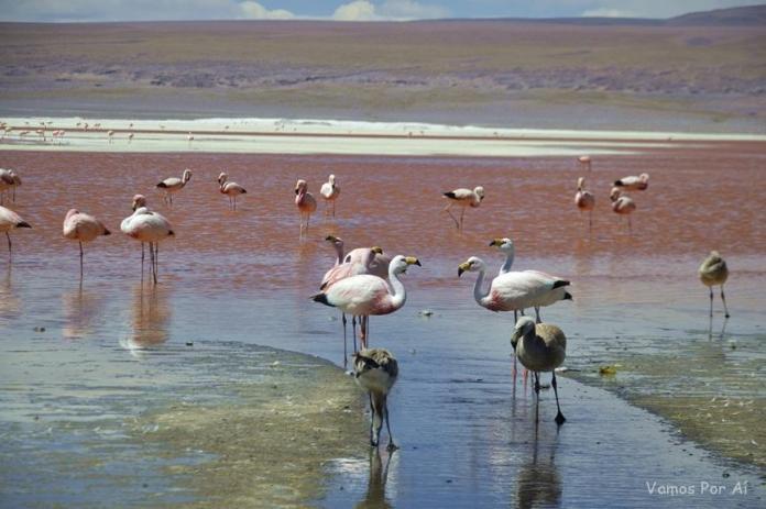 Lagoa Colorada na Bolivia