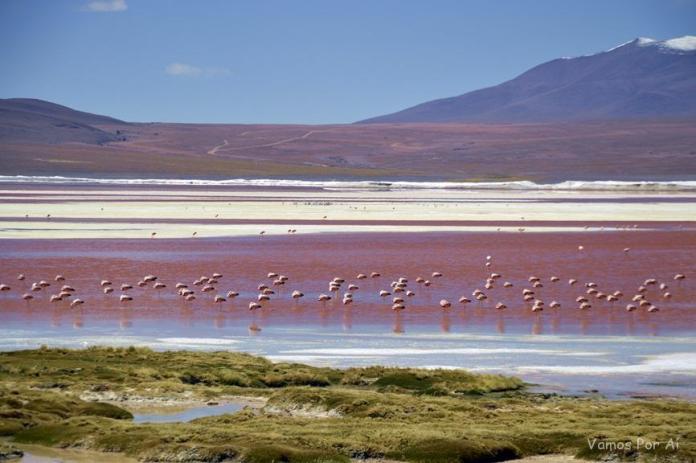 Laguna Colorada na Bolívia