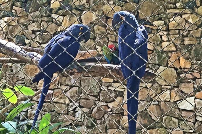 Arara azul no Zoológico de São Paulo